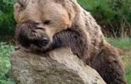 تصاویر جالب و دیدنی از چرت زدن و خوابیدن حیوانات