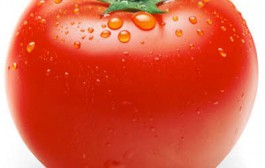 گوجه فرنگی دشمن سرطان و شفاف کننده پوست