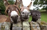 عکس های خفن و جالب از حیوانات