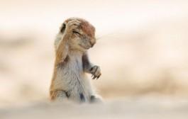 13 عکس بامزه از حیات وحش منتخب مسابقه عکاسی
